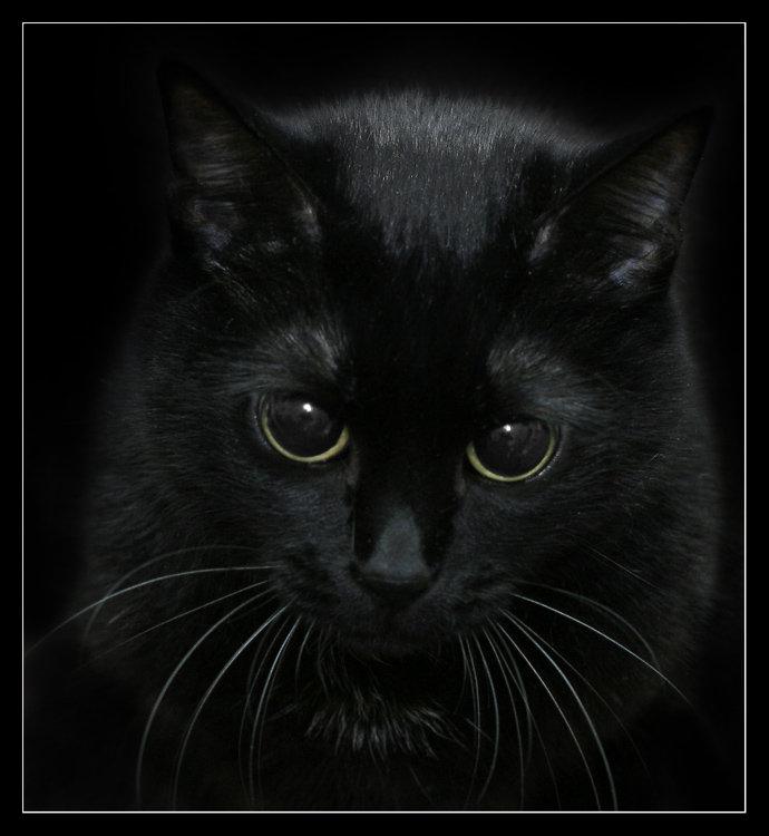 фото чёрные коты