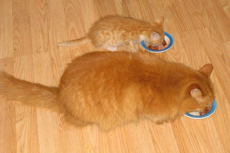 кастрация кота ловля мышей